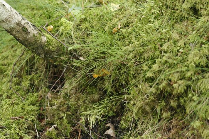 De er vanskelige å få øye på når de gjemmer seg under mosen